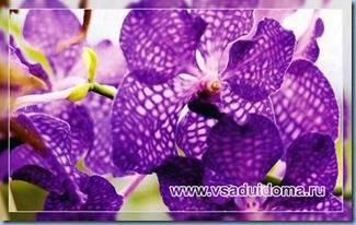 ухаживать за орхидеями-